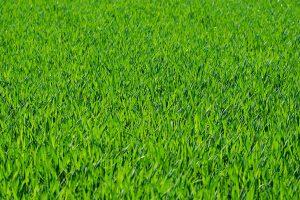 grass bg
